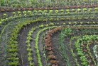 Barwite Vegetable gardens 15