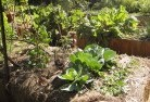 Barwite Vegetable gardens 2