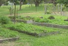 Barwite Vegetable gardens 5
