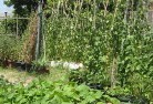 Barwite Vegetable gardens 6